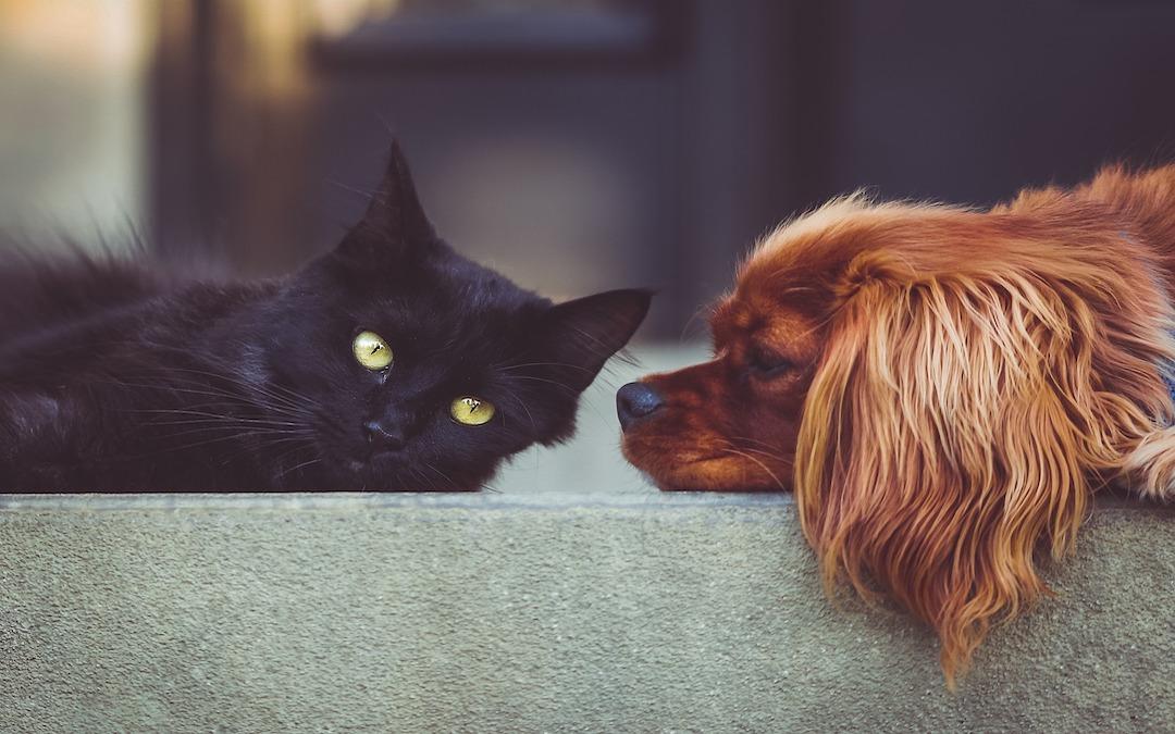 Hund oder Katze?